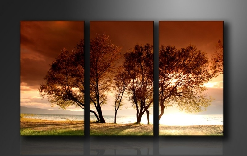 Natuur / Bomen