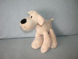 H-716  Evora hond