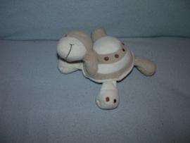 QZ-1034  Prenatal schildpad