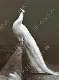"""Diamond Painting """"Peacock"""""""
