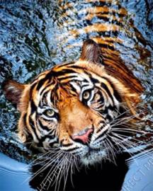 "Diamond painting ""Swimming tiger"""