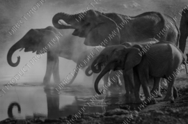 "Diamond painting ""Herd of elephants"""