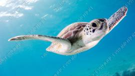 "Diamond painting ""Turtle in the sea"""