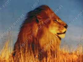 """Diamond painting """"Relaxed lion"""""""