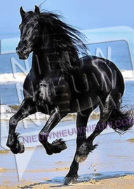 "Diamond painting ""Friesian horse"""