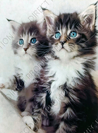 """Diamond painting """"Kittens with blue eyes"""""""
