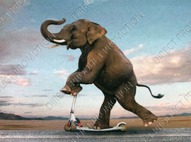 "Diamond painting ""Elephant on scooter"""