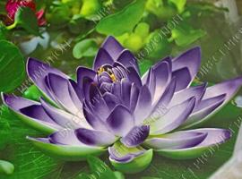 Diamond Paintings Bloemen & Planten
