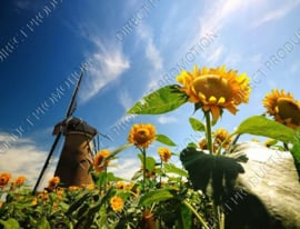 "Diamond painting ""Windmill near sunflowers"""