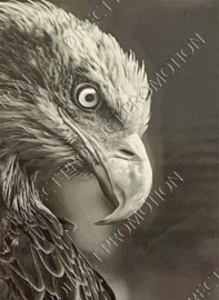 """Diamond Painting """"Eagle"""""""