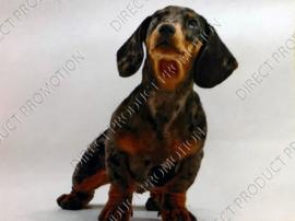 """Diamond painting """"Short-haired dachshund"""""""