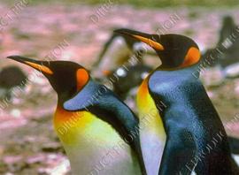 "Diamond Painting ""King penguins"""
