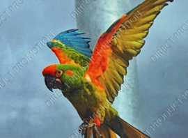 """Diamond Painting """"Parrot"""""""