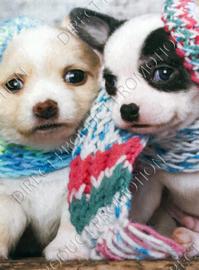 """Diamond painting """"Chiwawa puppies"""""""