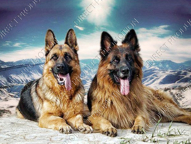 """Diamond painting """"German Shepherds long and short haired"""""""