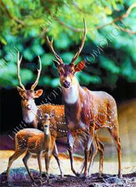 """Diamond painting """"Deer family"""""""