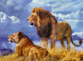 "Diamond painting ""Lions couple"""