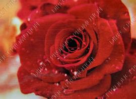 """Diamond painting """"Red rose"""""""