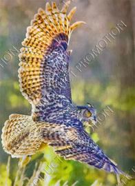 "Diamond painting ""Flying eagle owl"""