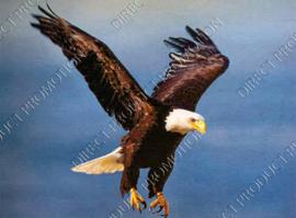 """Diamond painting """"Flying sea eagle"""""""
