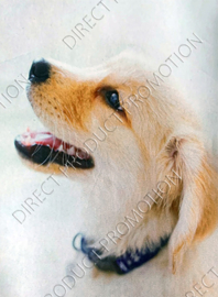 """Diamond painting """"Labrador retriever pup"""""""