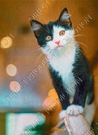 "Diamond painting ""Black whit white kitten"""