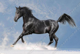 "Diamond painting ""Black horse"""