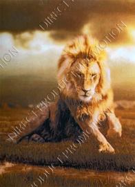"Diamond painting ""Lying lion"""