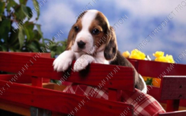 "Diamond painting ""Beagle dog"""