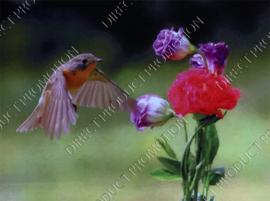 "Diamond painting ""Robin bird"""