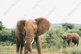 "Diamond painting ""Elephant with calf"""