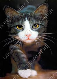 """Diamond painting """"Creeping cat"""""""