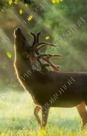 """Diamond painting """"Roaring deer"""""""