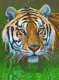 "Diamond Painting ""Tiger head"""