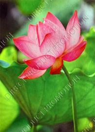 """Diamond painting """"Flower"""""""