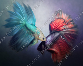"Diamond painting ""Siamese fighting fish"""
