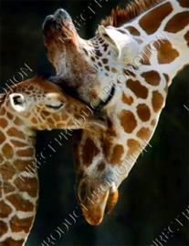 """Diamond painting """"Giraffe and calf"""""""