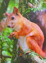 "Diamond Painting ""Squirrel"""