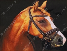 "Diamond painting ""Horse head with bridle"""
