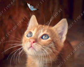 "Diamond painting ""Kitten sees butterfly"""