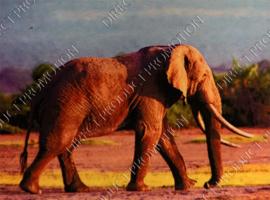 "Diamond painting ""Walking elephant"""