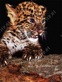 "Diamond painting ""Leopard cub"""
