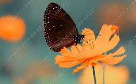 "Diamond painting ""Butterfly on yellow flower"""