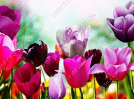 """Diamond painting """"Tulip field"""""""