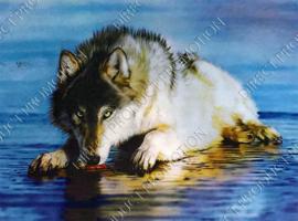 "Diamond painting ""Drinking wolf"""