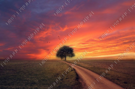 "Diamond painting ""Sunset with tree"""