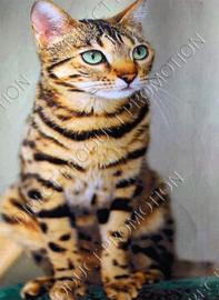 """Diamond painting """"Cat"""""""