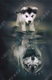"Diamond painting ""Husky puppy becomes wolf"""