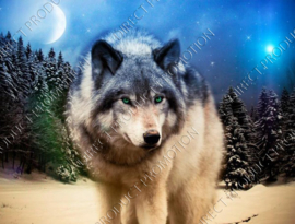 "Diamond painting ""Wolf in forest"""