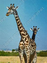 "Diamond Painting ""Giraffes"""
